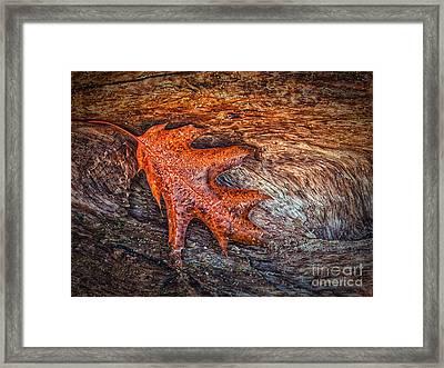 Oak Leaf Framed Print by Todd Bielby