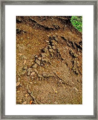 Oak Leaves. Deeply Rooted. Texture. Framed Print by Andy Za