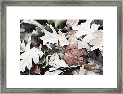 Framed Print featuring the photograph Oak Leaves In Fall by Gary Brandes