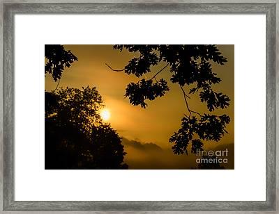 Oak Leaves Sunrise And Fog Framed Print