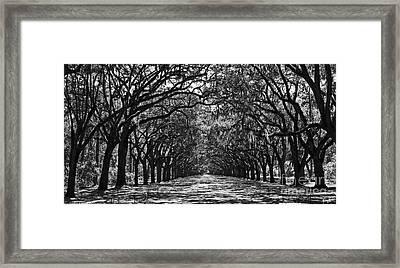 Oak Lined Lane Framed Print
