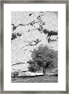Framed Print featuring the photograph Oak On A Hill Blk And Wht by Gary Brandes