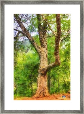 Oak On The Etowah Framed Print
