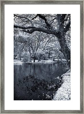 Oak On The Side Of The Pond Framed Print by John Rizzuto