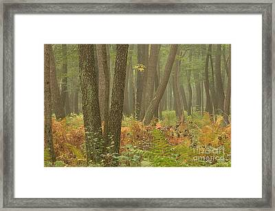 Oak Openings Fog Forest Framed Print