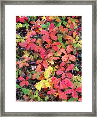 Oak Popouri Framed Print by Ray Mathis