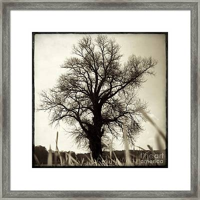 Oak .quercus Sp Framed Print by Bernard Jaubert