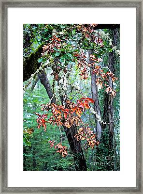 Oak Stories Framed Print by Gwyn Newcombe