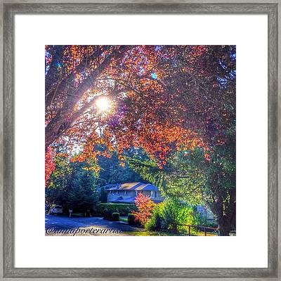 Oak Street Early Evening Light Framed Print