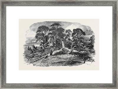 Oak Struck By Lightning In Westwood Park Framed Print