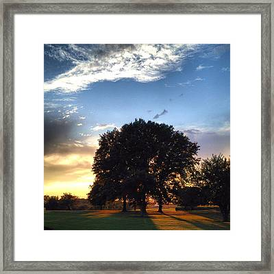 Oak Tree At The Magic Hour Framed Print