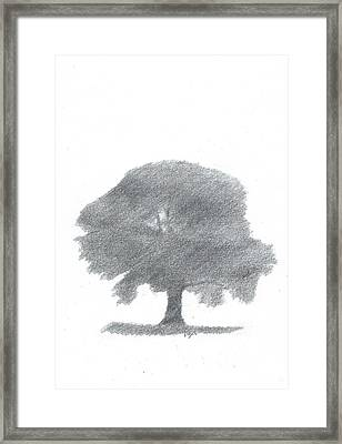 Oak Tree Drawing Number Four Framed Print by Alan Daysh