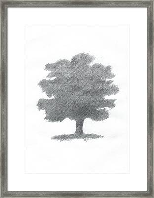 Oak Tree Drawing Number Seven Framed Print by Alan Daysh