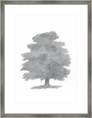 Oak Tree Drawing Number Six Framed Print by Alan Daysh