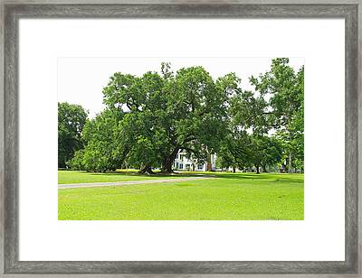 Oak Tree In Front Antibelum Home Framed Print by Ronald Olivier