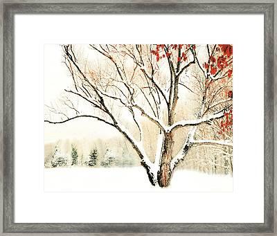 Oak Tree In Winter Framed Print by Dorothy Walker