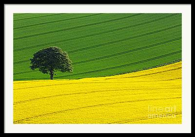 Yellow Images Framed Prints