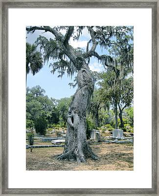 Oak Tree With A Face Framed Print