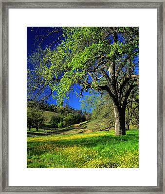 Oak Trees And Wildflowers Cover Framed Print by John Alves
