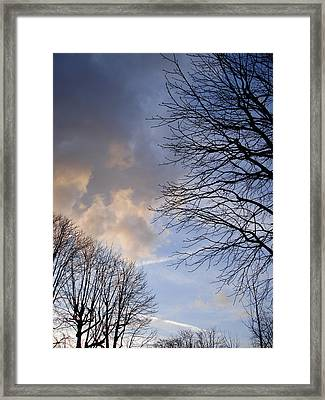 Oak Trees Composition Framed Print by Michel Mata