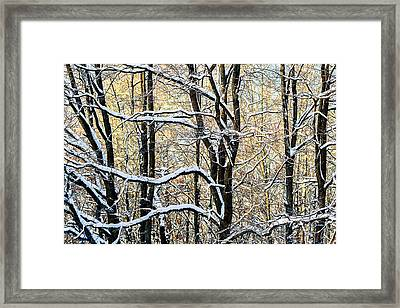 Oak Trees In Winter Framed Print by Alexander Senin