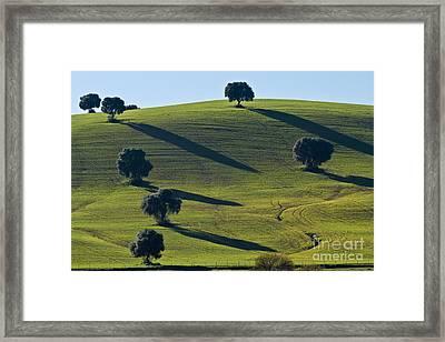 Oak Trees On Grazingland Framed Print by Heiko Koehrer-Wagner
