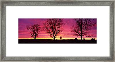 Oak Trees, Sunset, Sweden Framed Print by Panoramic Images