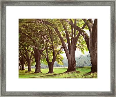Oak Umbrellas Framed Print by Laura Parrish