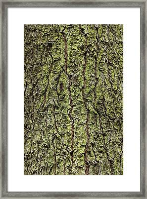 Oak With Lichen Framed Print