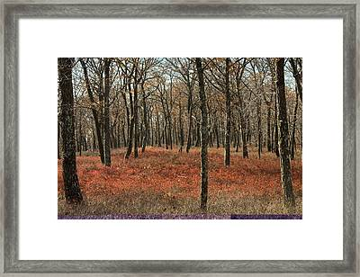Oak Woodland In Autumn Framed Print by Science Photo Library