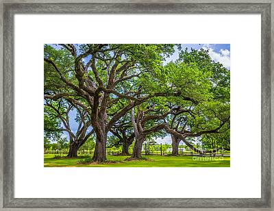 Oakland Framed Print by Inge Johnsson