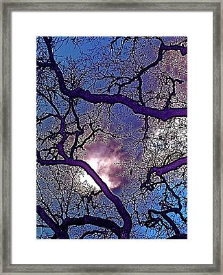 Oaks 11 Framed Print by Pamela Cooper