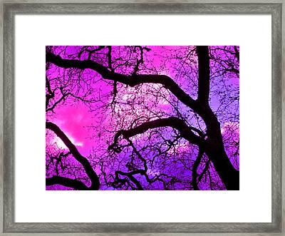 Oaks 17 Framed Print by Pamela Cooper