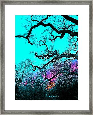 Oaks 4 Framed Print by Pamela Cooper