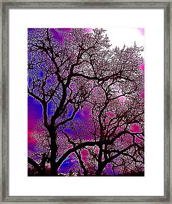 Oaks 6 Framed Print by Pamela Cooper