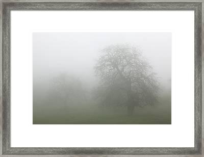 Framed Print featuring the photograph Oaks In Fog - Central California by Ram Vasudev