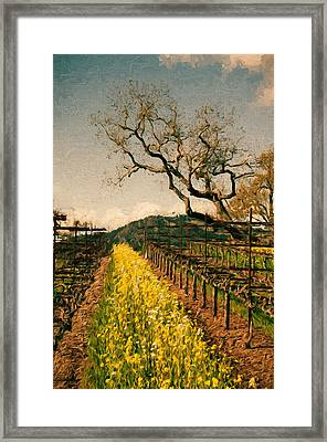 Oaks In The Vineyard Framed Print