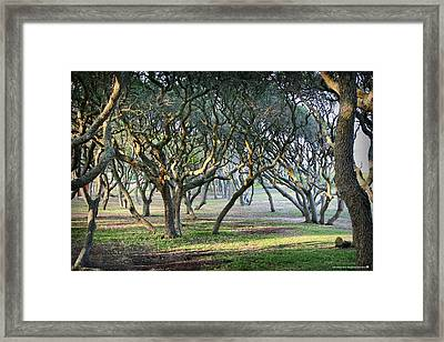 Oaks Of Fort Fisher Framed Print by Phil Mancuso