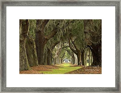 Oaks Of The Golden Isles Framed Print