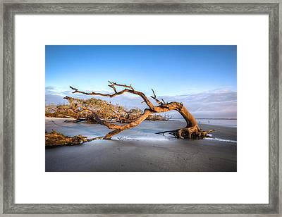 Oaks On Driftwood Beach Framed Print