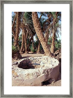 Oasis Well And Trees Framed Print by Jon Wilson