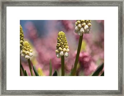Oberon's Rainbow Forest Framed Print by Connie Handscomb