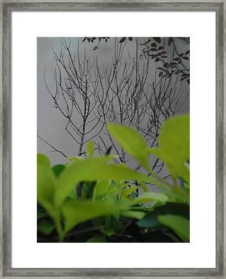 Observateur Framed Print by Beto Machado