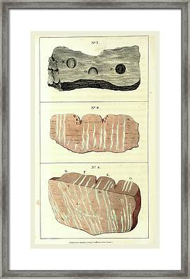 Observations On Certain Curious Indentations In The Old Red Framed Print by Litz Collection