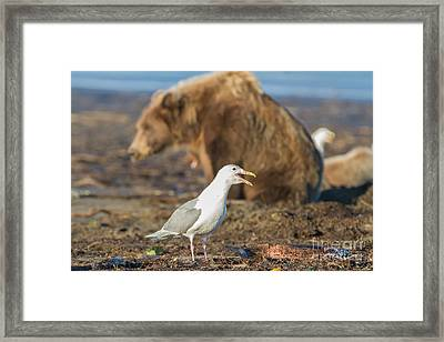 Obstructed View Framed Print by Chris Scroggins