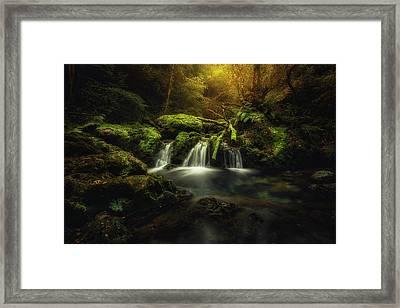 Obya Framed Print
