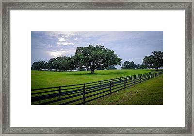 Ocala Pasture Framed Print by Louis Ferreira