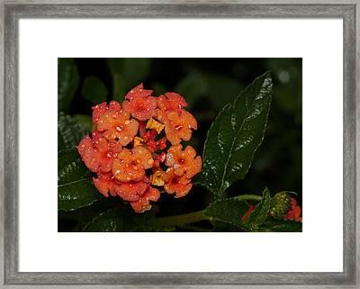 Ocean Beach Florets Framed Print