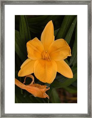 Ocean Beach Yellow Flower Framed Print