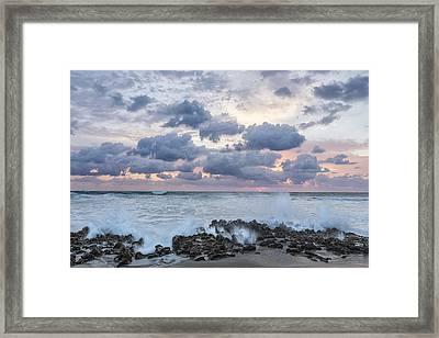 Ocean Blooms Framed Print by Jon Glaser